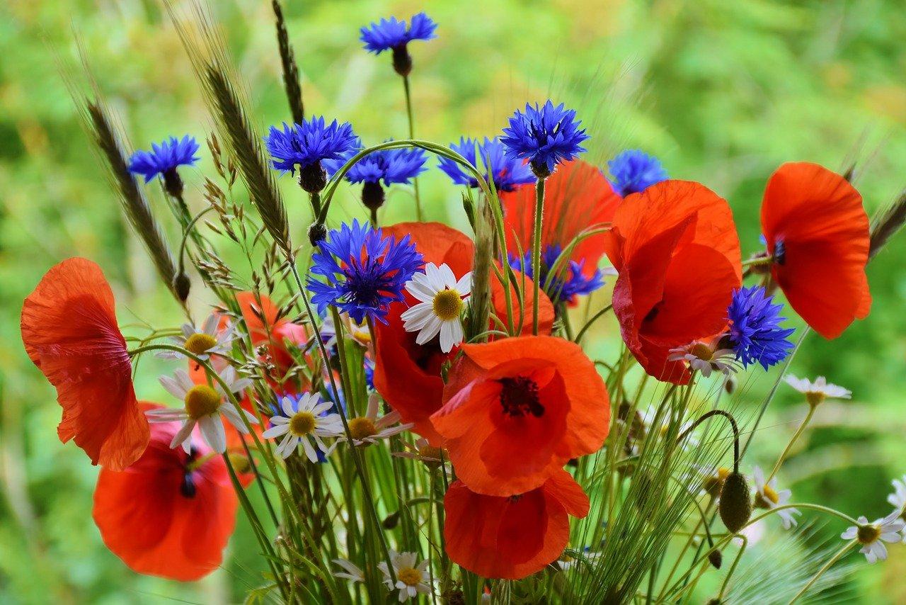 Commemorating Armistice Day