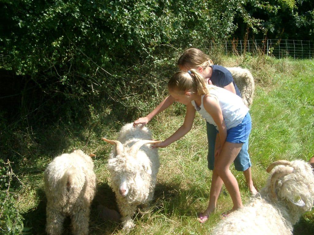 goat and alpaca farm, la baleine